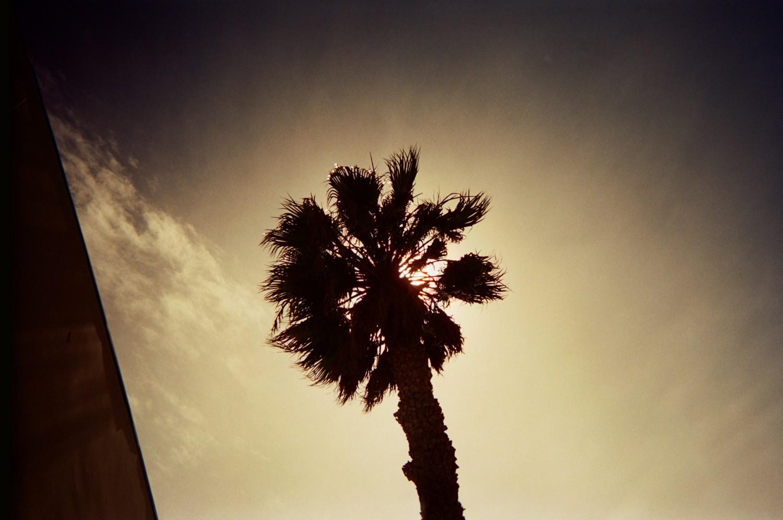 Malibu Trees
